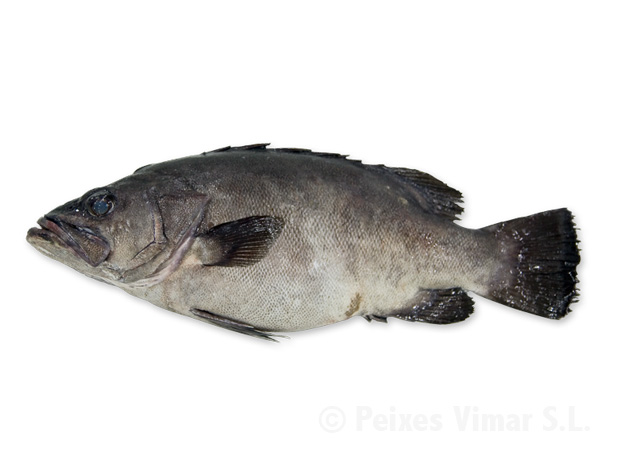 picture of wreck fish