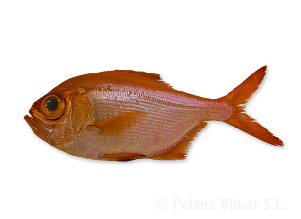picture of alfonsino