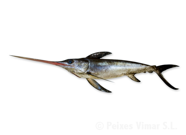 picture of swordfish