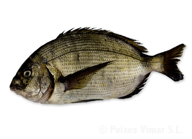 picture of white seabream